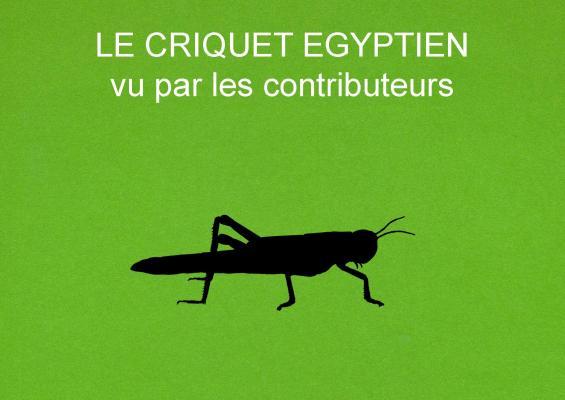 1 le criquet egyptien vu par les contributeurs titre